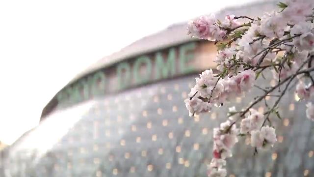 桜と東京ドーム